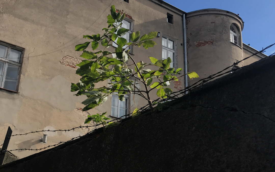 Niepotrzebne mury