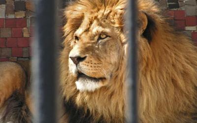 Oswoiłem lwa.
